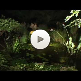 Create A Paradise - Aquascape LED Lighting