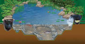 Ecosystem Pond Graphic