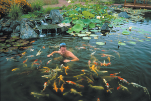 From Building Backyard Ponds To House His Pet Turtles To Building Ponds To  Make Money Over The Summer, Greg Wittstock Has Been Dabbling In Water  Gardens ...